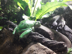 Héloïse De Ré, Melbourne Aquarium